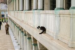 Istanbul Cat Blog (For91days) Tags: cats cute kitten istanbul katzen