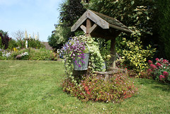 The Flowers got their Wish (martynhphoto) Tags: flowers overgrown garden bucket well wishing