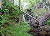 Waterfall flowing from Loch Allan (Nigel_Brown) Tags: uk greatbritain water lumix scotland waterfall unitedkingdom panasonic islay gb stockphoto 2013 nigelbrown dmctz8 lochallan tz8 portnaseilich