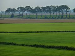 Trees in fog (RainerSchuetz) Tags: trees fog geotagged meadow blinkagain bestofblinkwinners blinksuperstars geo:lat=5341649722 geo:lon=643507500