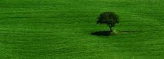 L' albero della speranza ... (Giuliana 57) Tags: tree verde green italia vert pienza grn toscana valdorcia albero arbre baum colline sanquiricodorcia collinesenesi collinetoscane greenbeautyforlife nikond5200 giulana57 giulianacastellengo lalberodellasperanza commentbygwlap
