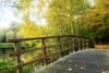 Follow me.... (Wilma v H- thanks 4 U'r lovely comments/faves!) Tags: bridge autumn trees parks dubbeldam ortoneffect autumnscenics bestcapturesaoi inspiringcreativeminds dubbelmondenpark