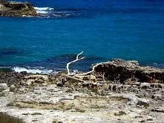The Branch. (girodiboa1) Tags: sea italy sun italia mare branch wind sole albero otranto ramo salento lecce salentu vento sule ientu girodiboa1