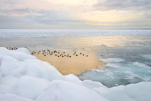 birds-&-icy-sunset