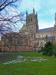 Worcester Cathedral Snowdrops (Tudor Barlow) Tags: winter england cathedrals snowdrops worcester worcestercathedral lumixfz200