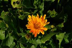 DSC03257_v1 (Falcdragon) Tags: flowers closeup walking countryside afternoon belgium walk sony february a7 lige photoninja walloonregion ilce7