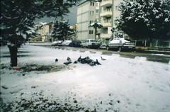 (eray.) Tags: winter snow cold bird film birds animal animals analog 35mm photography lomography kodak pidgeon lasardina