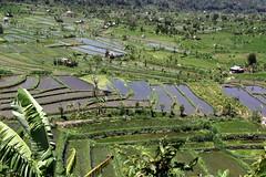 Along the Tirtagangga road. Bali ricefields. (asitrac) Tags: travel bali canon indonesia geotagged asia southeastasia rice id terraces unesco ricefields riceterraces sawah  nusatenggara indonsie tirtagangga   60d subak  asitrac lessersundaisland 039kmeasttirtagangga