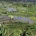 Along the Tirtagangga road. Bali ricefields.
