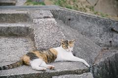DSC_2248.jpg (boyaolin) Tags: japan cat hiroshima  onomichi  sigma1750mm nikond7100