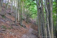 Camminare per boschi