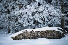A cold winter day (desomnis) Tags: winter snow frost frosty nature woods wood woodland cold mühlviertel austria österreich oberösterreich upperaustria sigma35mm sigma35mmf14art f14 desomnis woodpile woodstack whitefrost hoarfrost