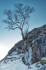 Frozen In Time (Renegade Scot) Tags: winter tree white branch snow landscape background cold frost blue ice sky isolated single weather silhouette snowy light frozen mountain freeze winterscene winterbackground wintersnow skybackground snowbackground photography photographer scotland scottish camping wildcamping