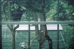 F1000020_lr (chi.ilpleut) Tags: singapore 2017 myday march outdoor outing film ilovefilms shootfilm kodakfilm expiredfilm jurongbirdpark birds seeing greenery ilovegreen analogue analog track grain