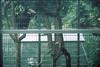 F1000020_lr (chi.ilpleut) Tags: singapore 2017 myday march outdoor outing film ilovefilms shootfilm kodakfilm expiredfilm jurongbirdpark birds seeing greenery ilovegreen analogue analog track grain