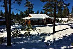 Wolf Tree (The VIKINGS are Coming!) Tags: cabin sierra tahoe plumas snow alpine baita hutte hytte chalet vacation