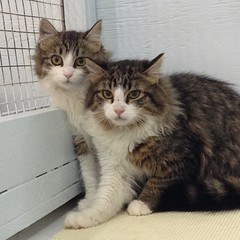 Annette (left - 5 month old spayed female) & Donovan (right - 5 month old neutered male)