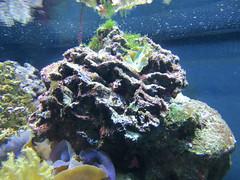 00734920 Aquarium Berlin 1 - 2017 (golli43) Tags: aquariumberlin zoo fische krokodile quallen wasser wasserpflanzen amphibien insekten unterwasserwelt