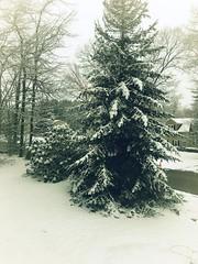 Winter Memories (Scorpiol13) Tags: snowscape winterscape coldtemperature snowcovered landscape silence serene peaceful nature tree snow winter