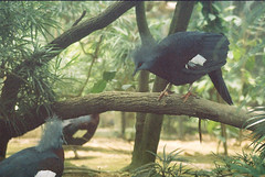 F1000009_lr (chi.ilpleut) Tags: singapore 2017 myday march outdoor outing film ilovefilms shootfilm kodakfilm expiredfilm jurongbirdpark birds seeing greenery ilovegreen analogue analog track grain