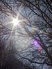Lente zon (flits4utilburg1) Tags: zon sun star ster flare boom tree takken branches lucht sky colours colors kleuren diafragma licht light spring lente 2017 teundonders tilburg leypark leijpark warmte