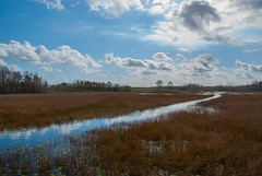 Grassy Waters (acarter5251) Tags: sky water grass clouds florida waters wetland grassy