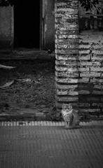 Get the f... out of my house...!! (Francisco Schmeda) Tags: cat francisco kitty gato gatito schmeda ochipinti