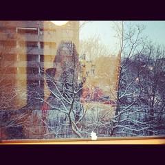 (ilana emer) Tags: schnee winter portrait snow window deutschland bonn fenster bonngermany