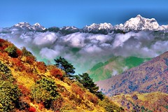 Autumn in The Himalayas [Explored] (pallab seth) Tags: travel autumn india plant colour tree tourism nature beauty horizontal forest trekking trek landscape outdoors dawn nationalpark asia tour village map indian hill meadow reserve scene adventure preserve himalayas scenics westbengal sandakphu kangchenjunga juniperus jannu pandim explored phalut sandakfu kumbhakarna singalilanationalpark trekroute thesleepingbuddha  pallabseth beautifulbengal