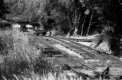 Purbeck mineral mining track, Norden Park & Ride, 1st August 2013 (OG47) Tags: film blackwhite mine track railway disused pentaxmesuper purbeck narrowgauge rustycrusty swanagerailway smcpentaxm100mmf28 fomapan100asa