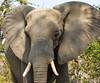 Botswana - Moremi NP (jschort10) Tags: africa birds skeleton coast wildlife lion safari zimbabwe elephants botswana namibia chobe moremi etosha himba vlei sossus canonsx50 schwakopmund