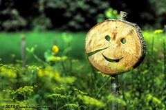 Mr funny face (Fr@nk = back) Tags: funnyface topf25 netherlands laughing landscape cool topf50 topf75 funny europe dof bokeh laugh topf100 limburg nextime canonef100mmmacro sonynex5 hatseflats watmooi mrtungsten62 frankvandongen wwworvilcom