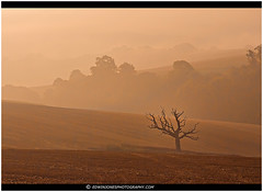 Misty Downland Dawn Houghton (Edwinjones) Tags: pictures autumn trees summer england sun west color colour tree green nature field leaves misty fog photoshop downs landscape photography dawn sussex early photo nationalpark colours photos branches sony scenic picture pic valley greenery dslr houghton tamron southdowns arun topaz dslra550