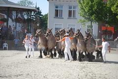 trekpaardkeuring ijzendijke 21072013 4011 (jo_koneko_san) Tags: horses horse holland netherlands cheval nederland zeeland chevaux paard hollande zeeuwsvlaanderen 2013 ijzendijke parden trekpaard zeeuwstrekpaard trekparden