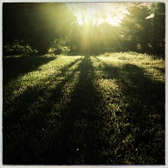 (221/366) Long Light (Cathy G) Tags: light sun home garden shadows farm squareformat flare odiham iphone 366 iphone5 221366 iphoneography