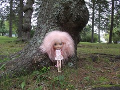 Maeve and the knotty tree
