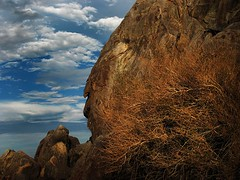 Rock Beard (Jeff Powers) Tags: california ca ridgecrest