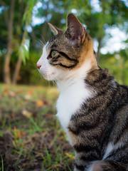 PhoTones Works #3593 (PhoTones_TAKUMA) Tags: nature animal cat landscape scenery     kimura   takuma   ep5 photones