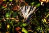 Butterfly (Di Gutti (diegogutierrez79@gmail.com)) Tags: portrait naturaleza color colour macro green nature canon butterfly pose sevilla focus colours retrato colorfull posing colores seville sierra hills mariposa hdr posando ard gettyimages foco colorido sevilha siviglia primerplano coleurs pruna diegogutierrez sevillan canoneos450d sevillában digutti