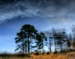 coming through in waves (Fr@nk ) Tags: park blue trees sky holland tree water clouds forest canon topf50 waves hiking circles air lucht topf100 topf200 meinweg 1dsmkii herkenbosch nationaalparkdemeinweg upsd mrtungsten62