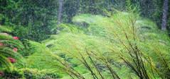 An Ocean of Love for the Living Things (Zoom Lens) Tags: wet water rain drops drop drip rainy raindrops rainstorm drips splash splatter rainfall downpour drizzle rainwater johnrussellakazoomlens copyrightbyjohnrussellallrightsreserved