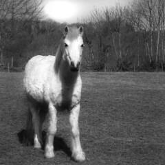 Jasper the Pony (Harry Carter*) Tags: camera shadow blackandwhite horse nature animal photo bright donkey pony cannon shetland
