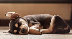 Beka (Nataluxx) Tags: dog puppy perro cachorro