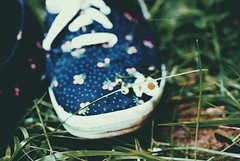 daisies and laces. (McKinleyLaw) Tags: summer flower color nature grass shoe nikon shoes warm pretty august lovely