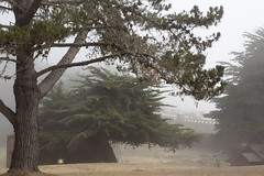 Trees in fog_3 (VeronicaMacaulay) Tags: trees tree nature fog landscape outdoors treetrunk cambria californiacoast treesinfog