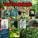 Top Ten Animals
