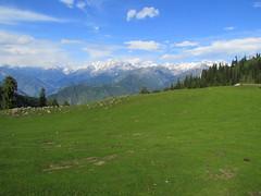Paya Meadow (Zain's) Tags: pakistan nature beauty meadow valley paya shogran kpk
