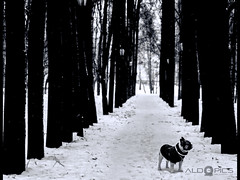 Pet Photography - The dog who walkedd alone
