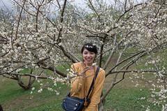 DSC_1199 (chenjn) Tags: d600 nikon 2470mm 妖怪村 柳家梅園 taiwan 信義鄉 梅花