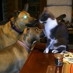 Hiroki and the Demon Dogs thumbnail